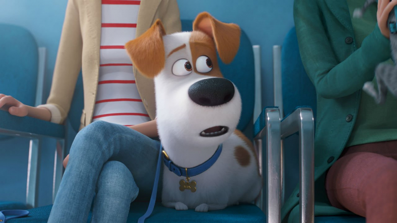 Sekretne życie zwierzaków domowych 2 - pełny zwiastun zdradza fabułę animacji