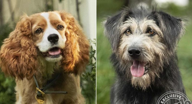 Zakochany kundel - Disney znalazł psiego aktora z filmu w schronisku