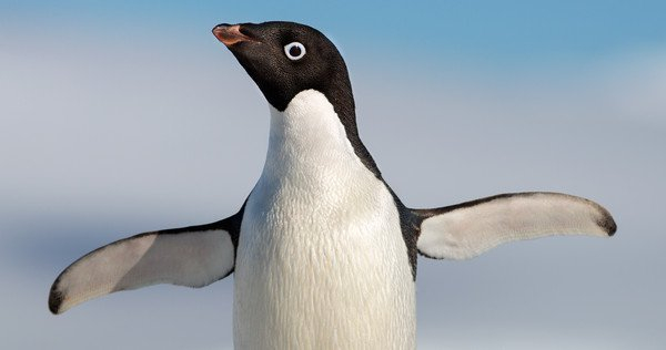 Pingwin Steve w nowym filmie Disneya. Zobacz zwiastun