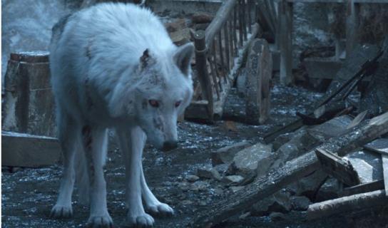 Gra o tron - zdjęcia z planu spin-offu. Czy to godło Starków?