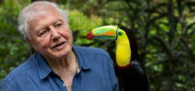David Attenborough: BBC musi zmienić zasady gry, aby konkurować z Netflixem
