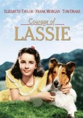 Odwaga Lassie